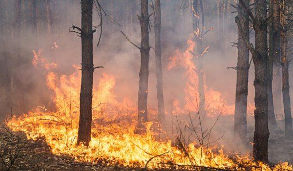 immagine con un incendio in una pineta